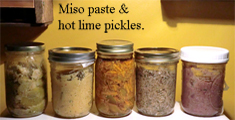 Miso Paste & Pickles - Fermenting with Favero
